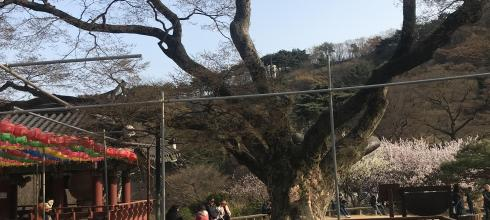 This tree is 1,500 years old and is kept alive with an IV and a sturdy pole, it is the second oldest item at the temple besides the 3,000 year old fort built around the temple