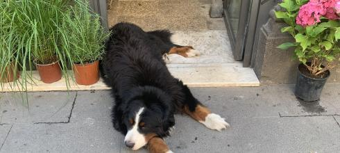 A dog (il cane in Italian) in a flower shop.