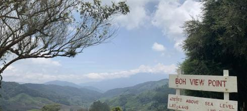 This is the Boh Tea Plantation in the Cameron Highlands of Malaysia located in Perak.