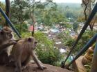 Monkeys enjoying the view