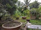 Fruit garden in my friend's backyard