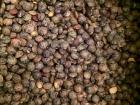 An up-close look at the green lentil of Le Puy