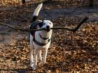 Argie was very happy to find this big stick