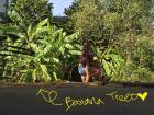 Living among banana and coconut trees!