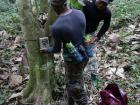 Fabrice and Yannick are setting up a trail camera in a cocoa farm. These cameras are motion activated and the only way to observe wildlife which is afraid of humans.