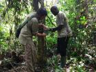 I am setting up a trail camera in the forest with the aid of Bertrand Abodo who is a student from the Higher Institute of Environmental Sciences