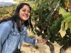 Tempranillo grapes grown in the La Rioja region of Spain