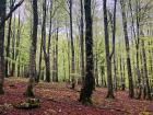 The Natural Park of Urbasa and Andía includes areas of beech forests