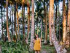 Wandering through the coconut groves of Siargao