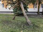 A broom that was left to wait on a tree while the employee took a cigarette break. These brooms look old fashioned, but work very well to sweep the leaves off the sidewalk. Rakes are used on the grassy areas like the U.S.