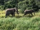 Some sweet members of an elephant family
