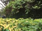 Plants on the street near Tiong Bahru